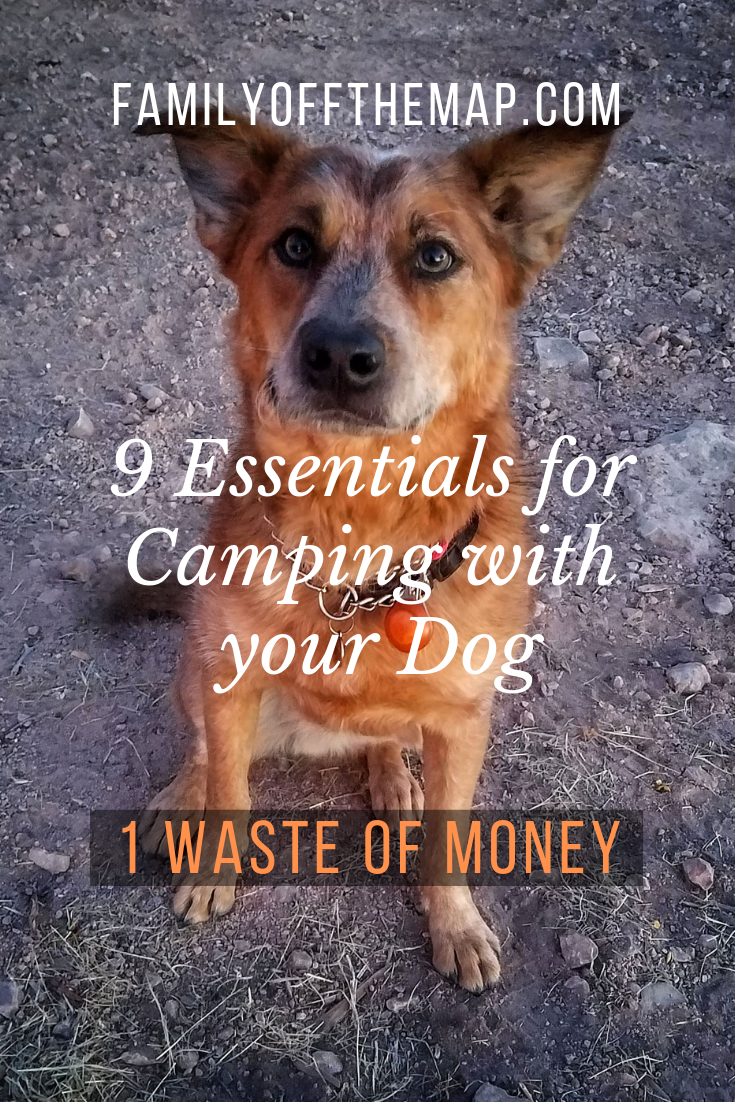 9 Dog Camping Gear Essentials we Love and 1 Waste of Money